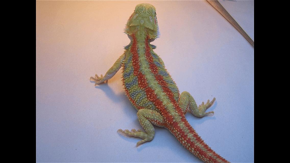 Reptile Super Show 2017
