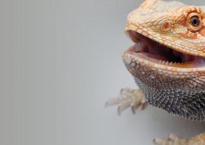 reptiles-show-