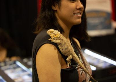 exotic lizards